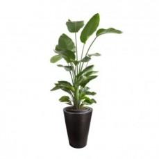 Range of Lightweight Indoor Plant Pots