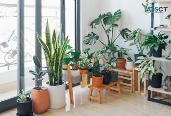 Lightweight Pots for Indoor and Outdoor