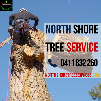 Expert Tree Services by North Shore Tree Services