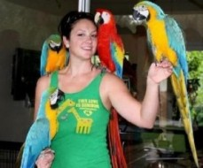 pair of Blue and Gold Macaws parrots