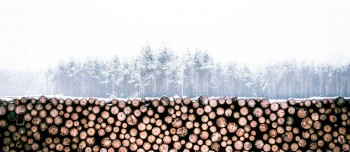 Buy Cheap Firewood in Sydney