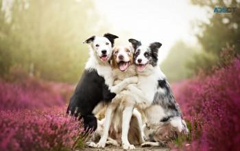 Lorettas Pet Styles - Dog Grooming Bushland Beach | Dog Grooming Townsville