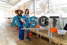 lovely livestock for sale