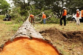 Tree Stump Removal Service