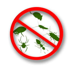 North sydney pest management