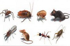 pest free the pest company
