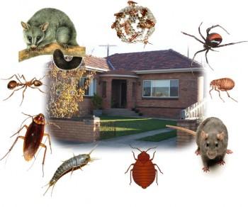 Drop dead pest control - home insect control Service