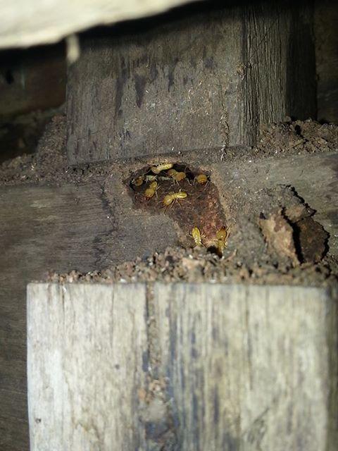 Termites solutio ...