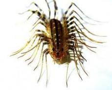 Conquest pest & termite control - bug control Service