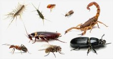 Brisbane termite and pest control - cockroach control