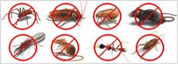 The pest guys house pest control Service