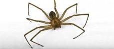 Adams pest control spider control treatment