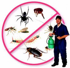 Central Florida Wildlife Removal, Inc