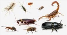 Pestworks  profe ...