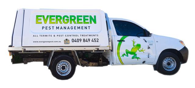 Evergreen pest m ...