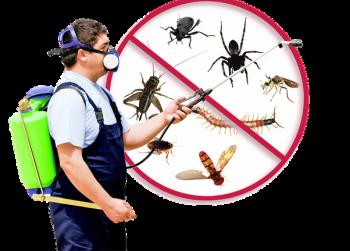 NTPC Newcastle total pest control