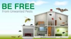 Safeguard  commercial pest control