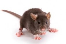 Beyond Clean Group commercial pest control Service