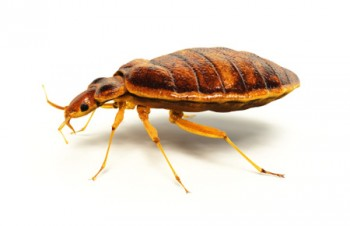 ECOLOGY TERMITE AND PEST