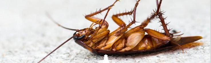 Mackay pest control