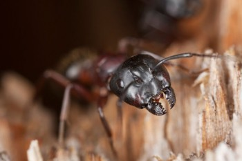 Shire pest control pty ltd