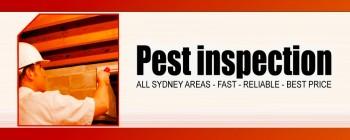 Beat the bug pest control