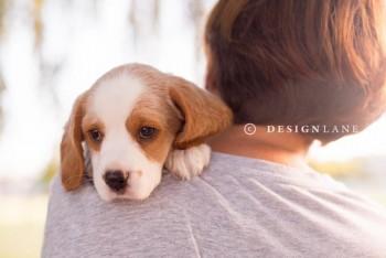 Designlane business card printing