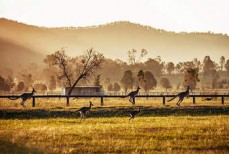 Hunter Valley Pr ...