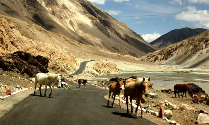 Soaring Himalaya ...