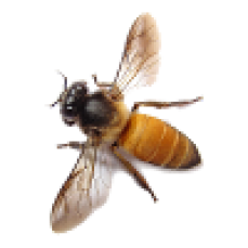 Bees pest control | Bees Pest Control melbourne | Bees Removal melbourne