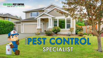 Pest Control Perth | Organic Pest Control | Ants Pest Control