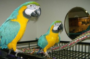 Available Macaw parrots