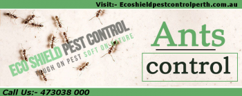 Ants Pest Control | Ants Pest Control Me