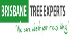 Tree Loping Services Gold Coast