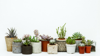 Best Indoor Plant Hire Services in Melbourne
