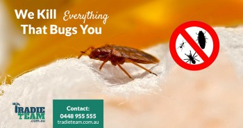 Professional Bed Bugs Treatment in Melbourne