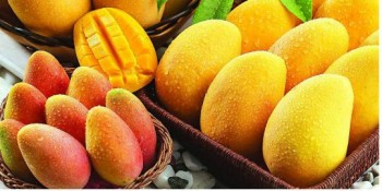 Mangoes Suppliers in India