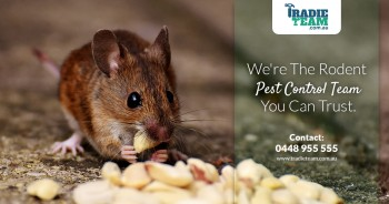 Looking For Effective Mice Removal Service in Melbourne?