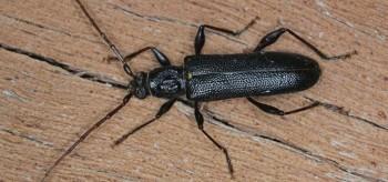 Borer Pest Control Melbourne