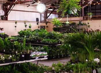 Huge Indoor Plant Warehouse Sale - Jungl
