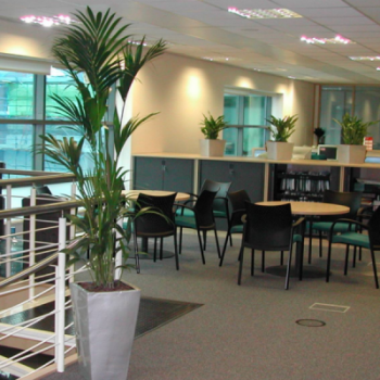 Best Office Plant Hire in Melbourne