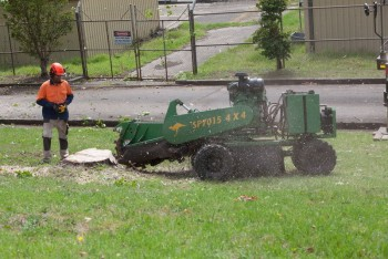 Find the best stump grinding service