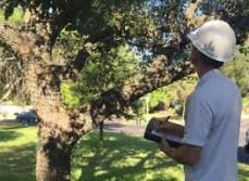 Professional Arborists Sydney - The Tree Doctor