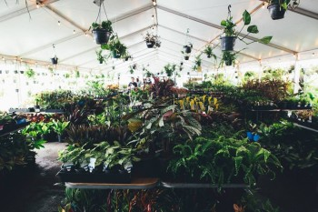 Brisbane - Indoor Plant Warehouse Sale