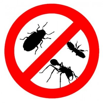Local Pest Removal Geelong