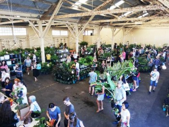 Perth - Huge Indoor Plant Warehouse Sale