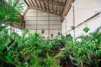 Melbourne - MEGA Indoor Plant Warehouse