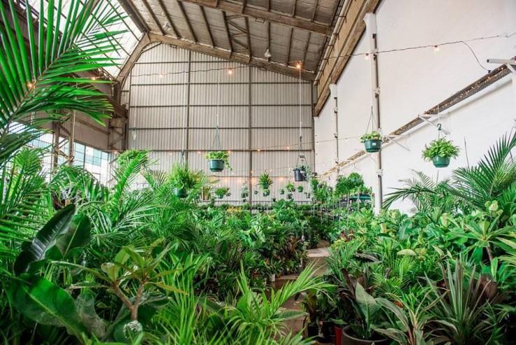 Melbourne - MEGA Indoor Plant Warehouse