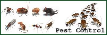 Organic Pest Control Canberra