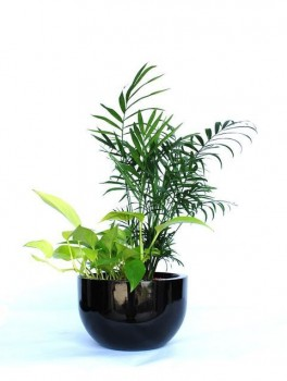 Indoor Plant Hire - Luwasa Indoor plant